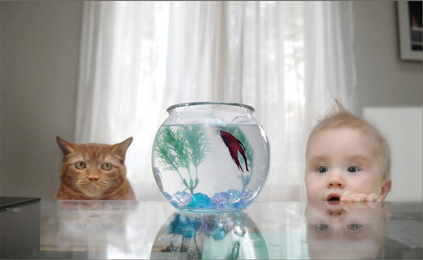 cat fish bowl baby