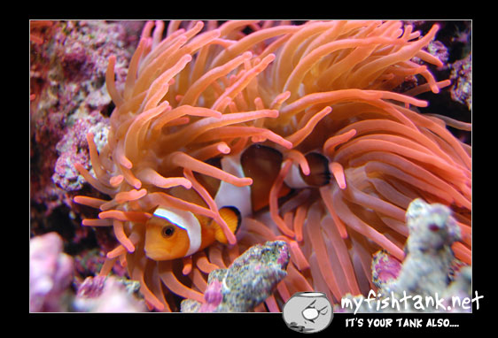 clownfish digital slr
